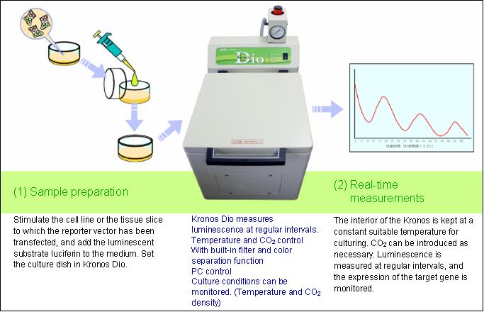 Kronos Dio: Real-time Gene Expression Measurement in Living Cells